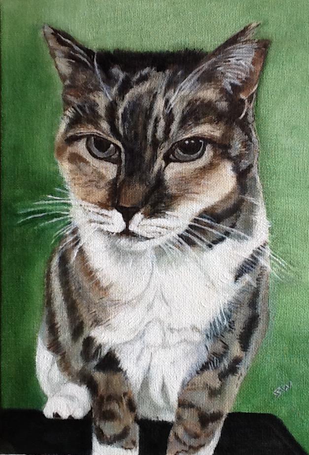 diane cat pebbles 1