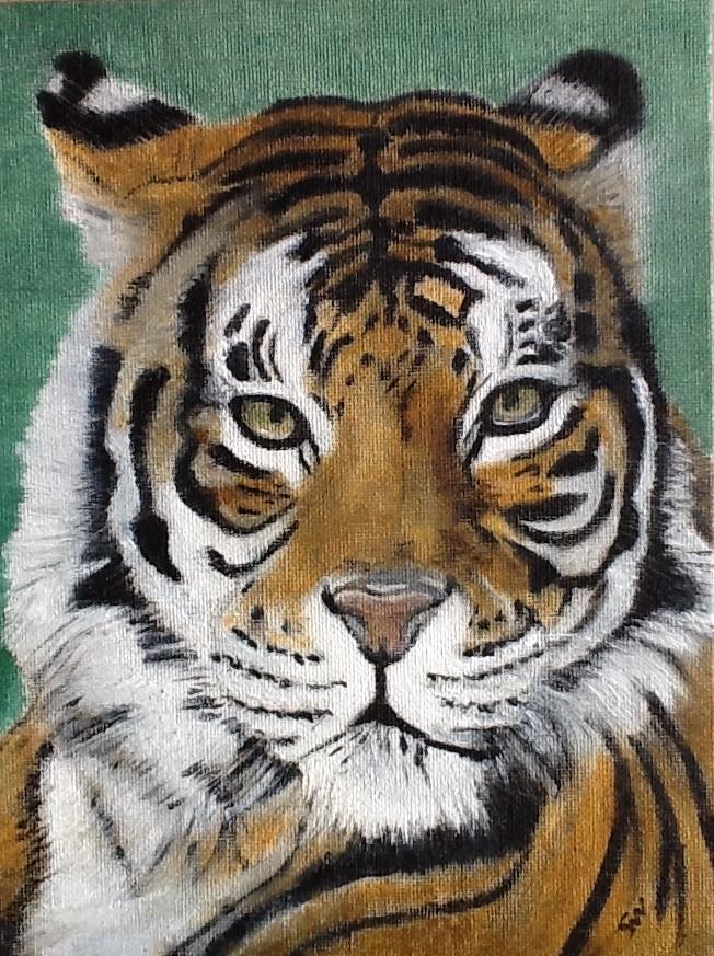 Tiger feb 19