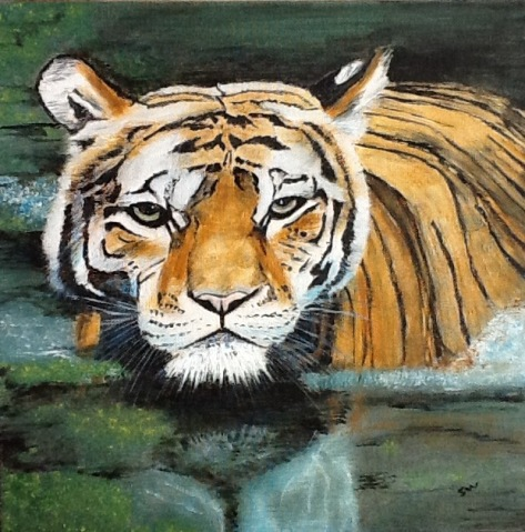 Tiger in Water July 2019