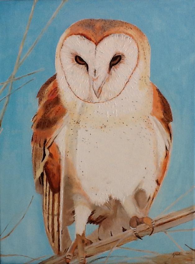 Owl April 2020
